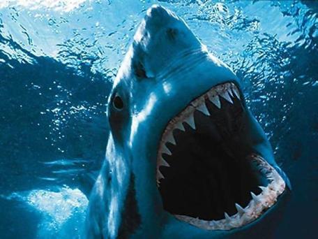 great-white-shark-2